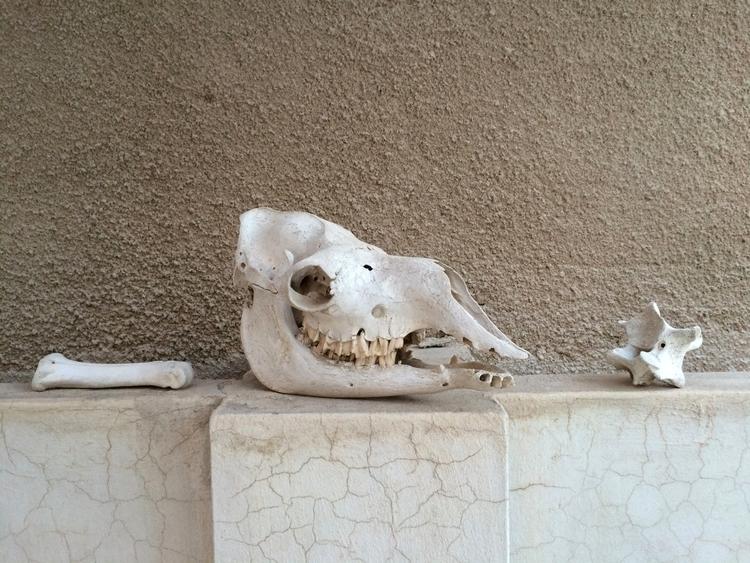 Missed Oasis. Dubai - camel, skull - elaineweeks | ello