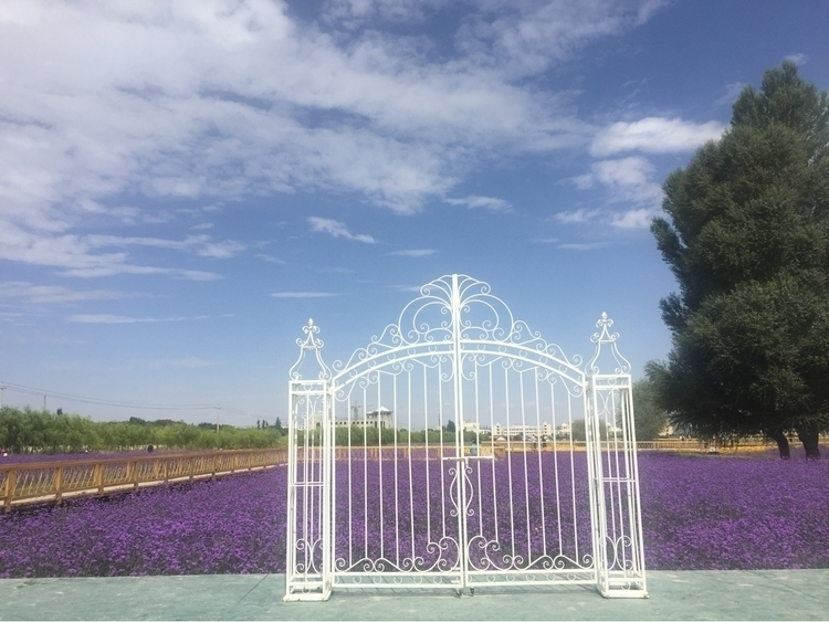 Mysterious gate middle garden - coolphotochic182 | ello