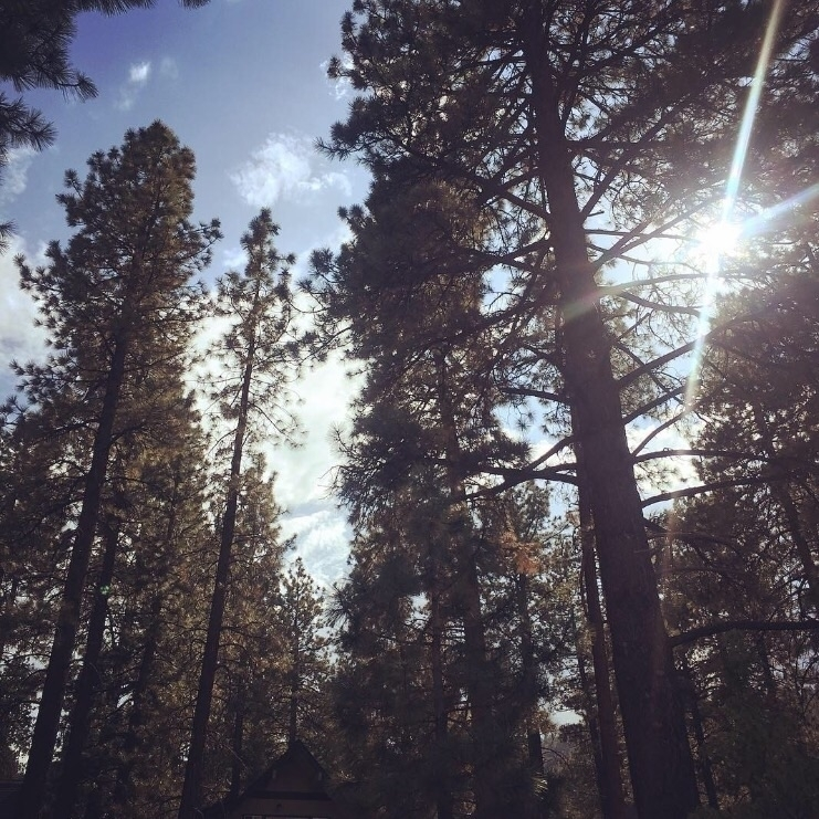 trees, canopy filtered sunlight - profoundmuse | ello