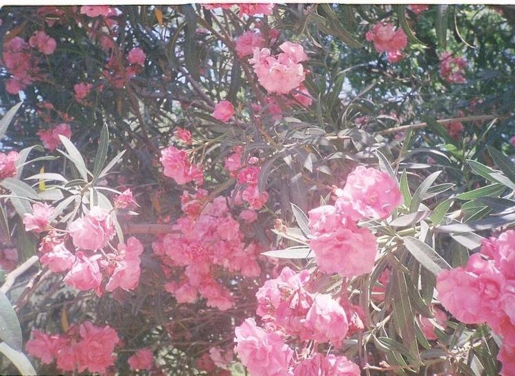 colours, flower, beautiful, scenery - mimisdrawingbook | ello