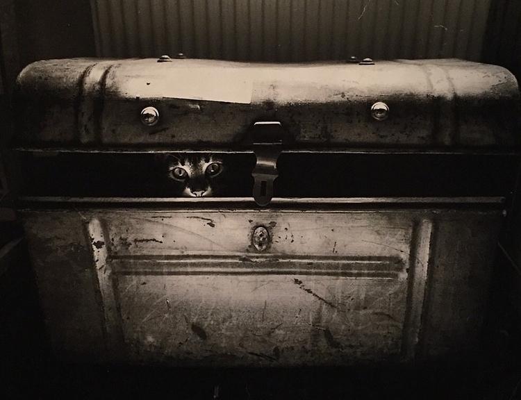 Car case  - blackandwhite, cat, filmsmotdead - jeffmoo | ello