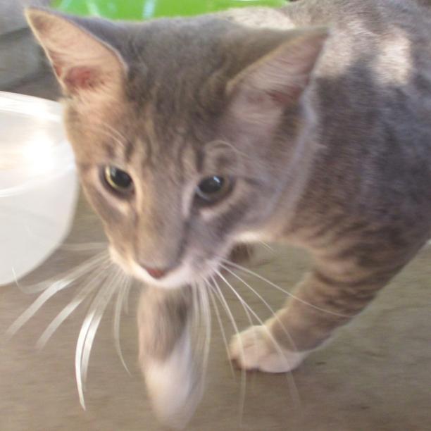 COMMENT SHARE NETWORKING CARE!  - snapcats | ello