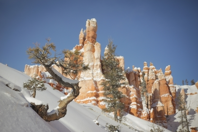 beautiful Bryce Canyon - blakeh | ello