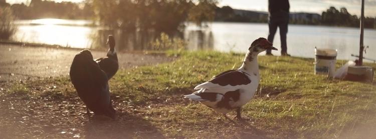 hard duck life - anamorphic - blakeh | ello