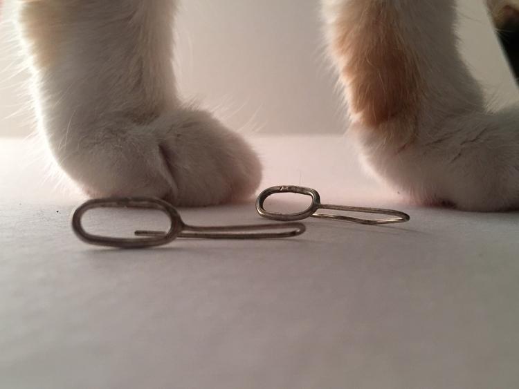 cat, feet, paw, pussy, kitten - laurelshada | ello