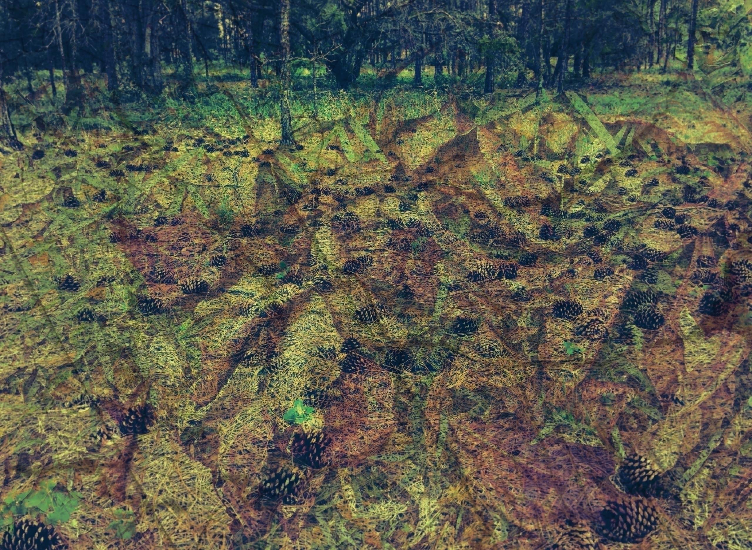 Disturbed Nature Pamir Kiciman  - wabi__sabi   ello