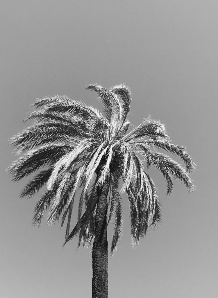 photography, minimal, contrast - agzed | ello