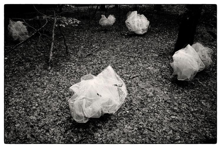 Clouded Forrest (Art work Danis - sselvejer | ello