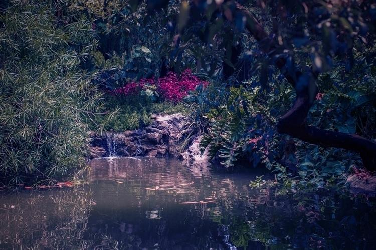 lush - nature, paradise, vibrant - kylie_hazzard_visuals | ello
