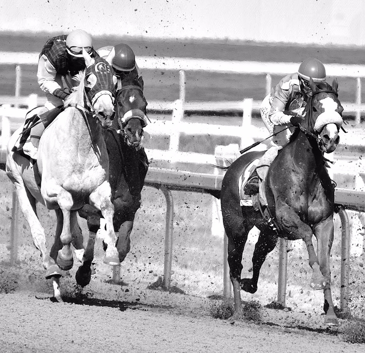 Born run - thoroughbred, horseracing - camwmclean   ello