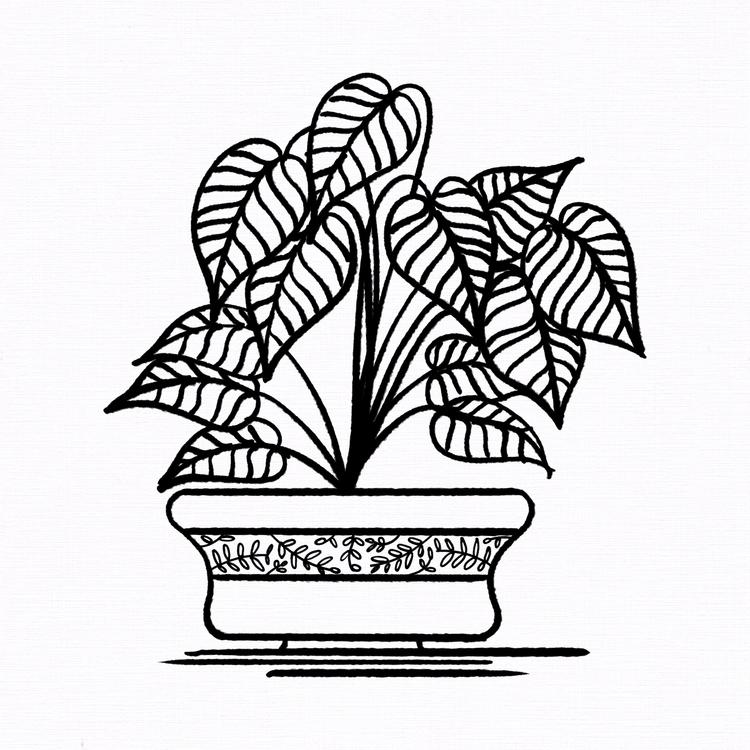 03 —'Arrowhead Vine' — Follow  - imponderably | ello