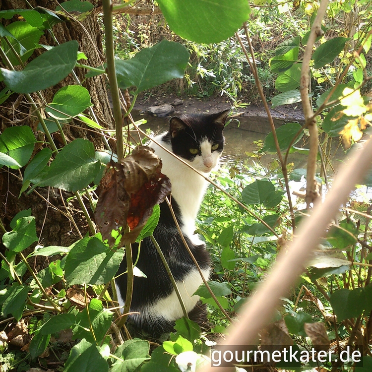 Loreley river Fuhne - cat, photography - gourmetkater | ello