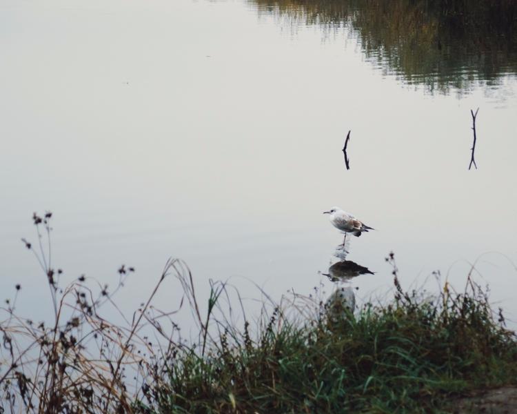 bird, water, grass, reflection - andreigrigorev | ello