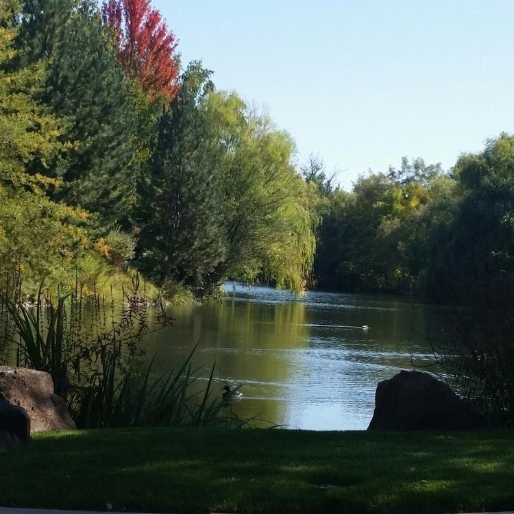 favorite places! peaceful - ducks - vickylorraine | ello