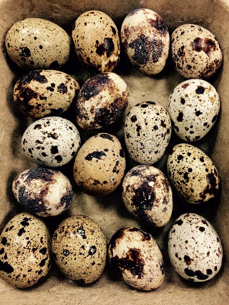 woman shop today give quail egg - nesbitandgibley | ello