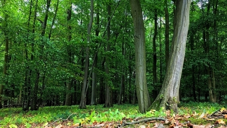 Boudicca Norfolk - nature, trees - davidhawkinsweeks | ello