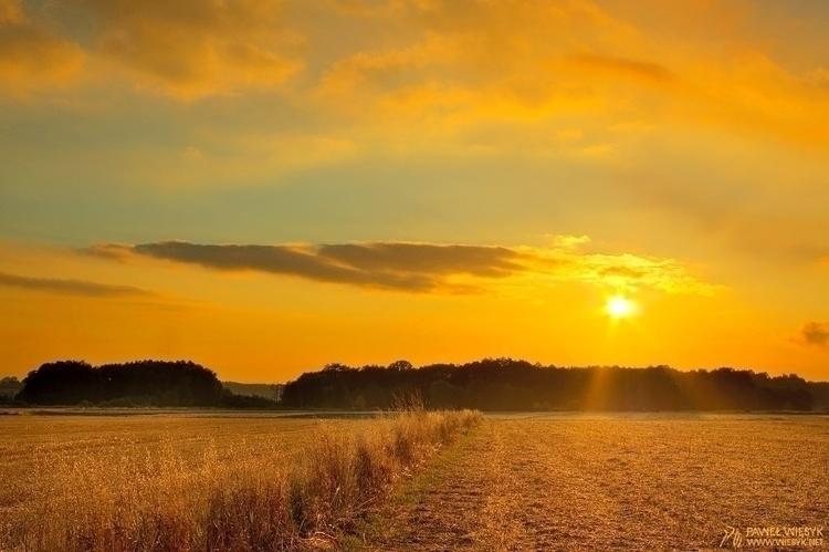 Harvest - photography, photo, colour - pawelwiesyk   ello