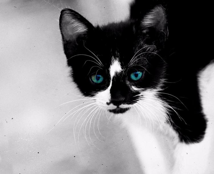 Handsome - animals, cat, bw - elhanans | ello