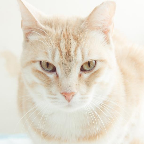 COMMENT SHARE Meet: Livingstone - snapcats | ello