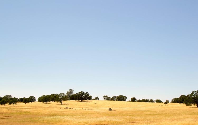 Central Californian Meadow - samannmoe | ello
