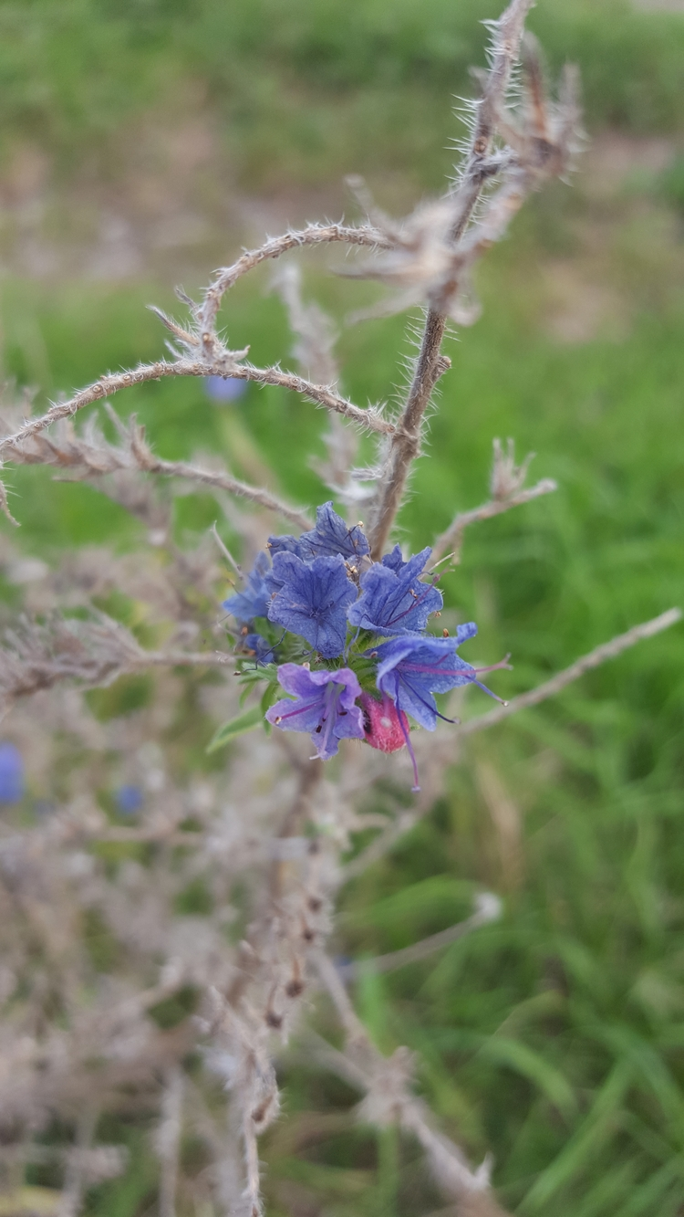 purple, flower, nature - nutsefe | ello