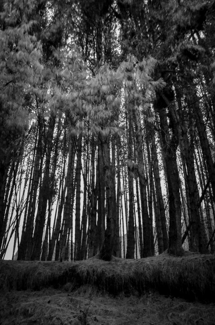 Embalse Neusa mil recuerdos - trees - aleu4 | ello