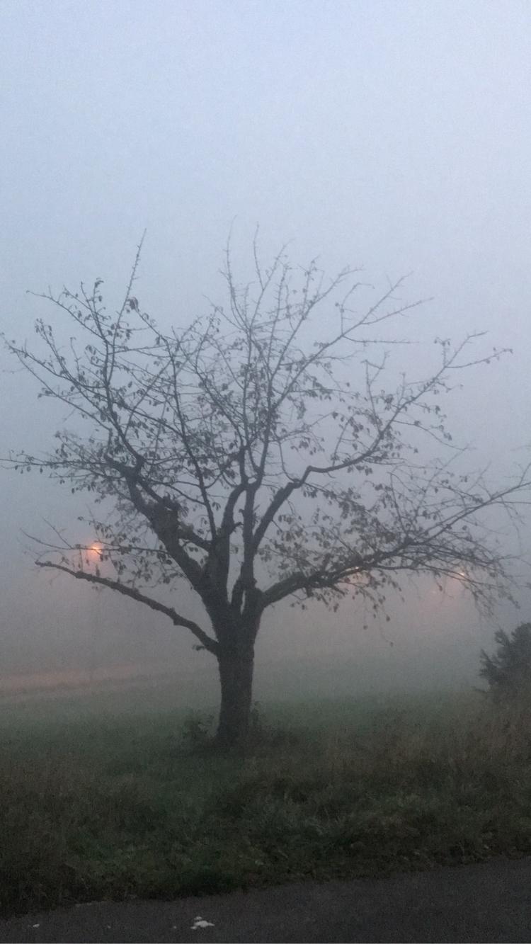 nevoeiro poderá cobrir os seus  - marciobh | ello