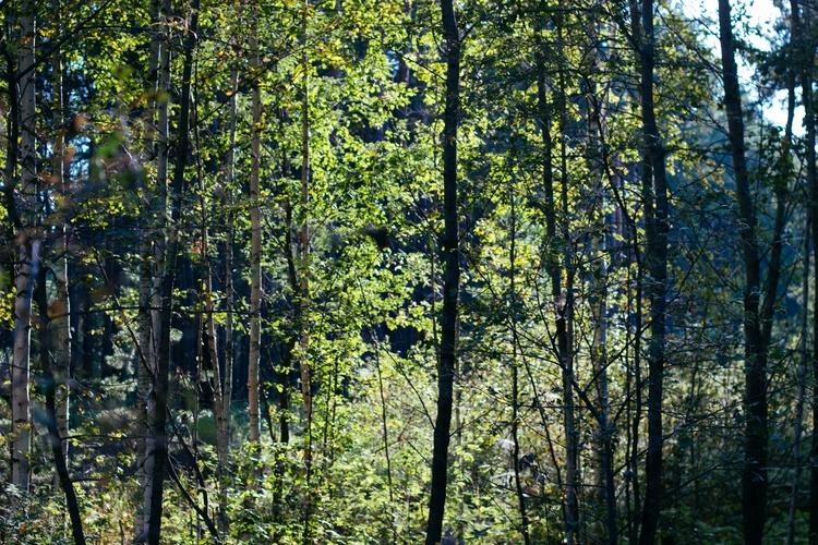 forest home - nnoe_telo | ello