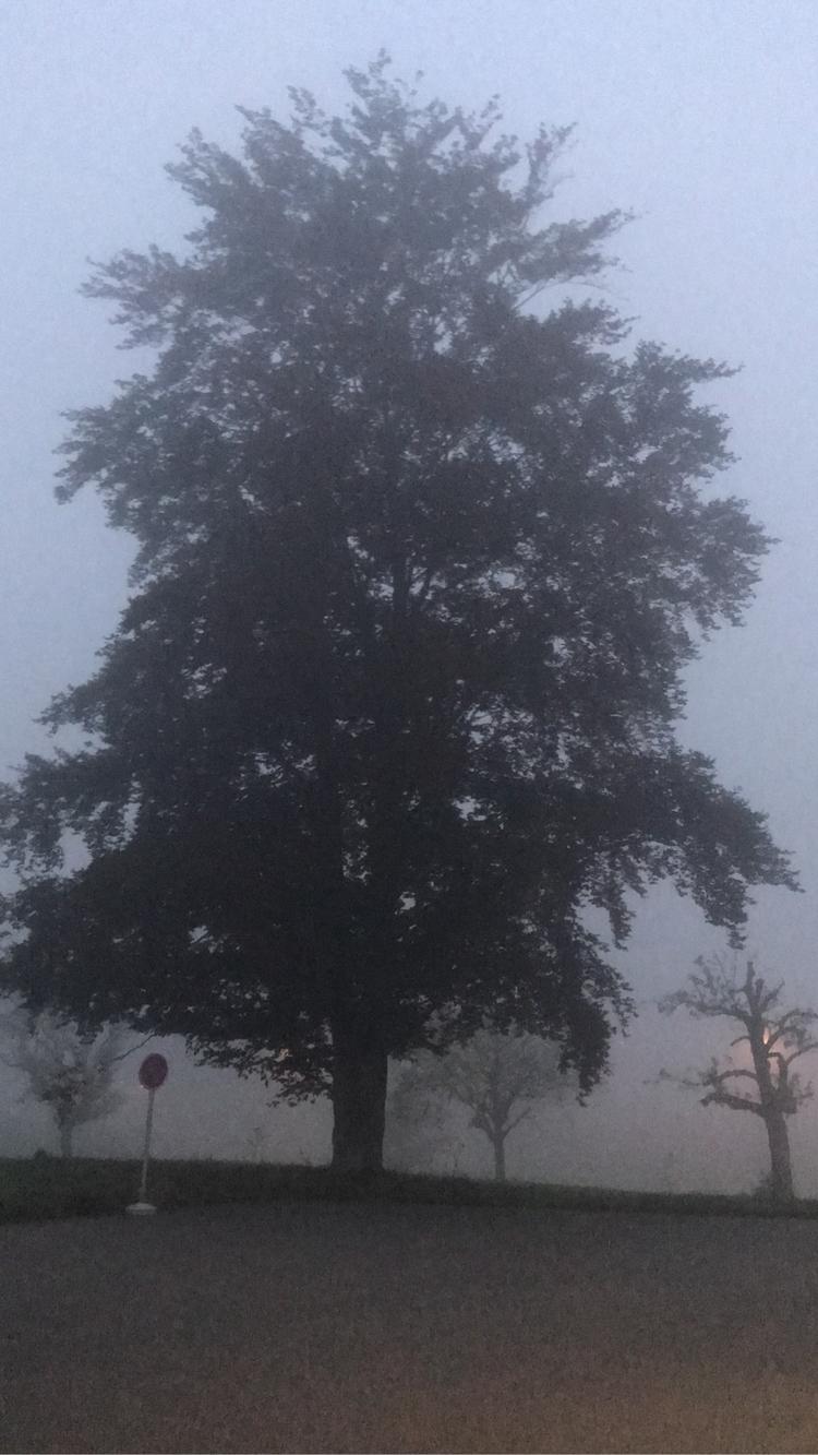 Der Nebel kann deine Wege abdec - marciobh | ello