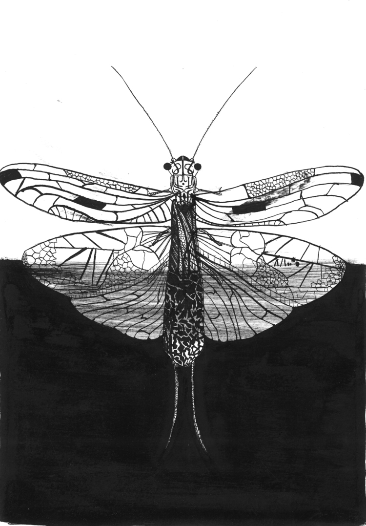 Hybrid plecoptera Ink feather p - amandaobara | ello
