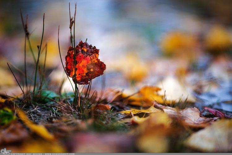 Autumn colors rain... (PAD prin - dangrabbit-photography | ello