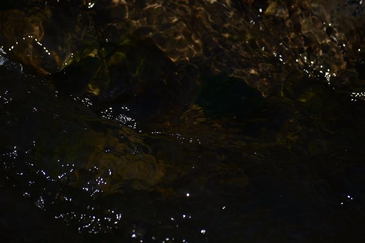 walks backyard: river - photography - sneakymoon | ello