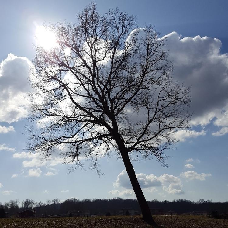 nature, tree, autumn, clouds - nutsefe | ello