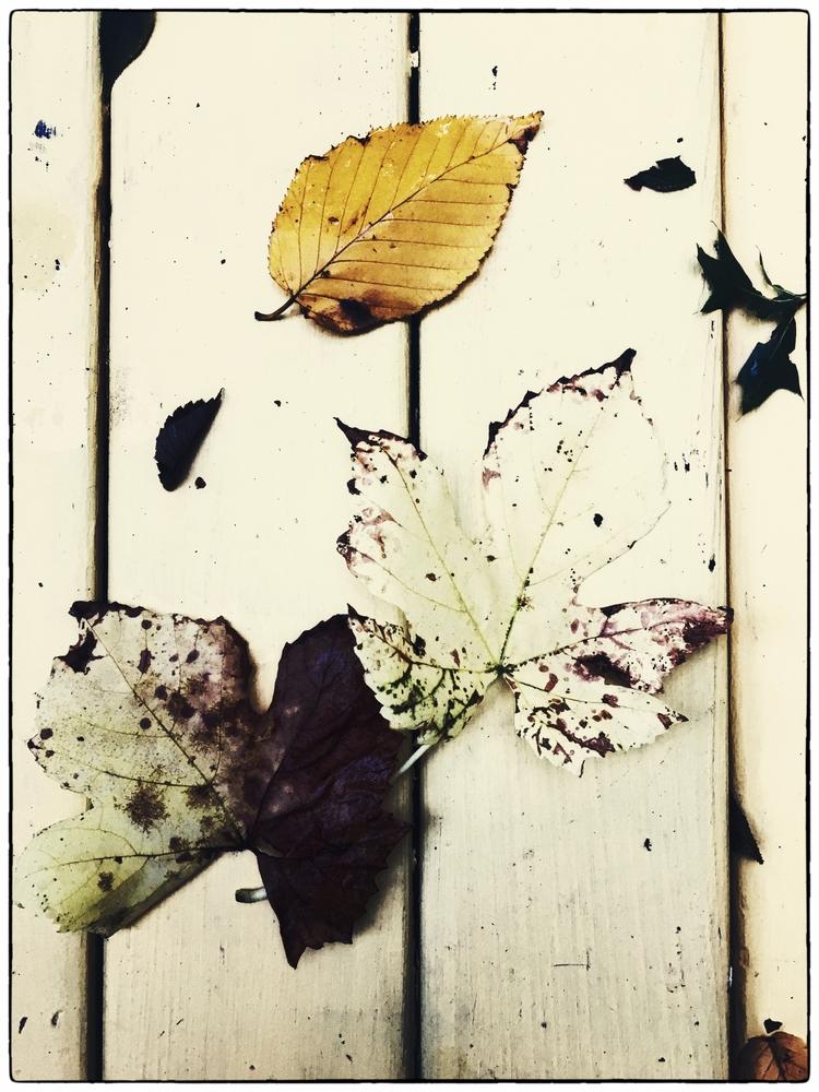 Fall - garden, ello, october - halehj | ello