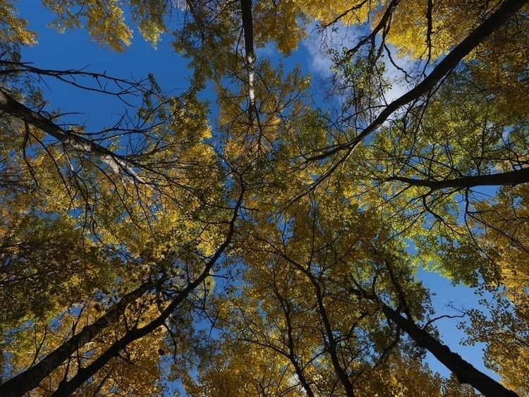 fall good. break - gfx50s, autumn - claesk | ello