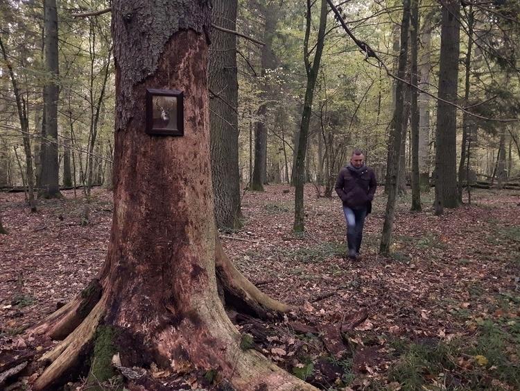Białowieża Forest Death Tree Fo - matyjaszewski | ello
