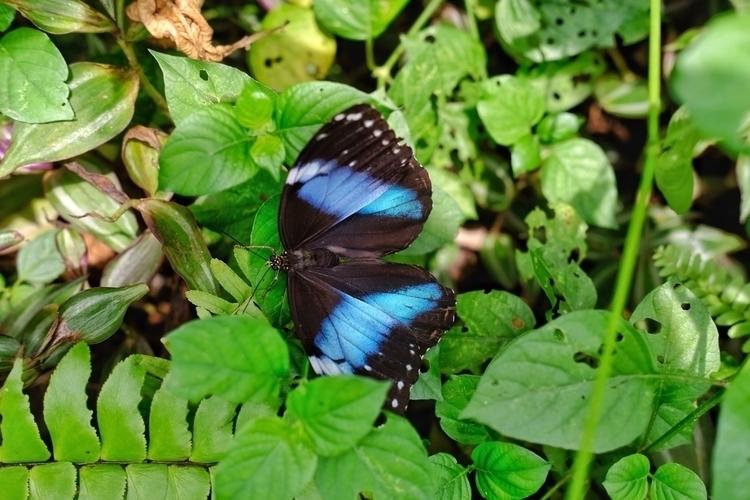 Es gibt tolle Schmetterlinge im - weltfarben   ello
