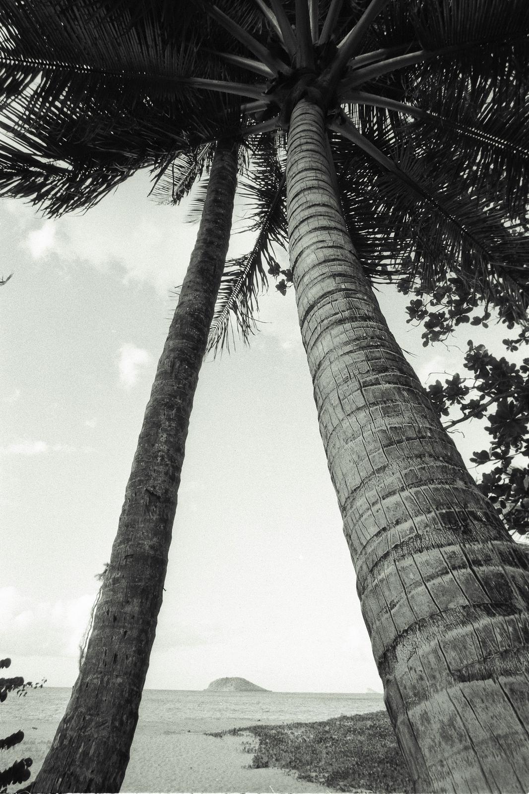 Tropical lines, love palm trees - nonophuran | ello
