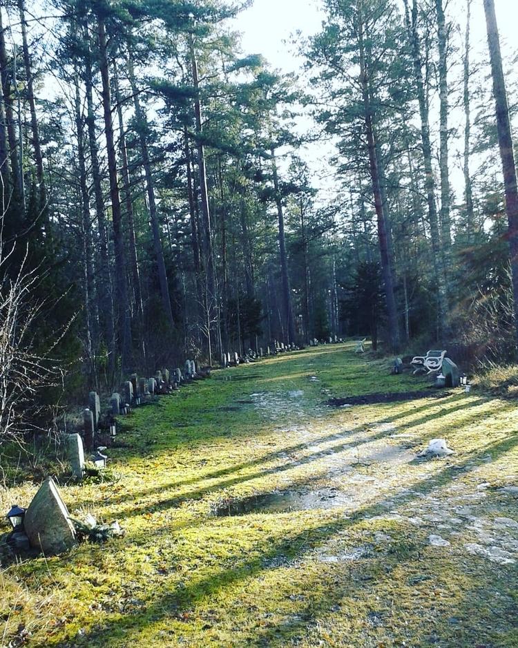 Långa, lätt rundade bågar av gr - skogskyrkogardar | ello