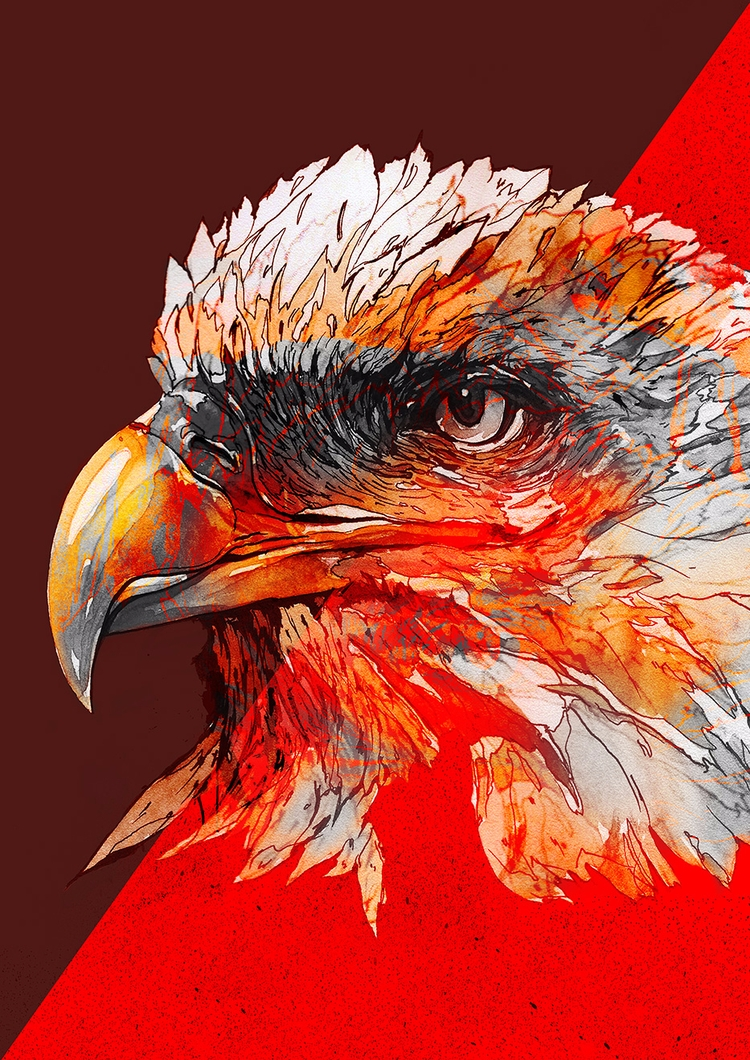 Eagle - design, illustration, art - bkzcreative | ello