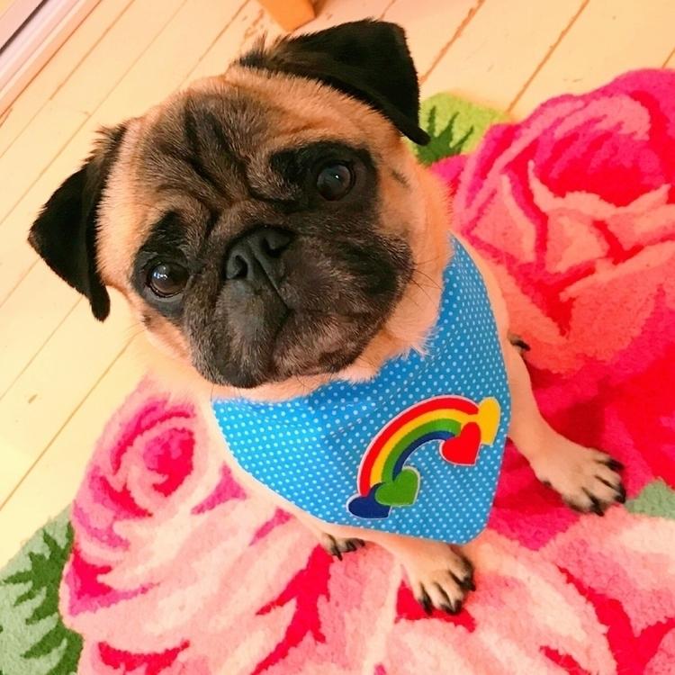 rainbow storm - pug, dogbandana - homeiswherethepugis | ello