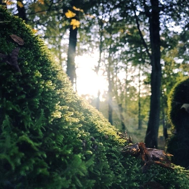 Fall - season, fall, green, light - yogiwod   ello