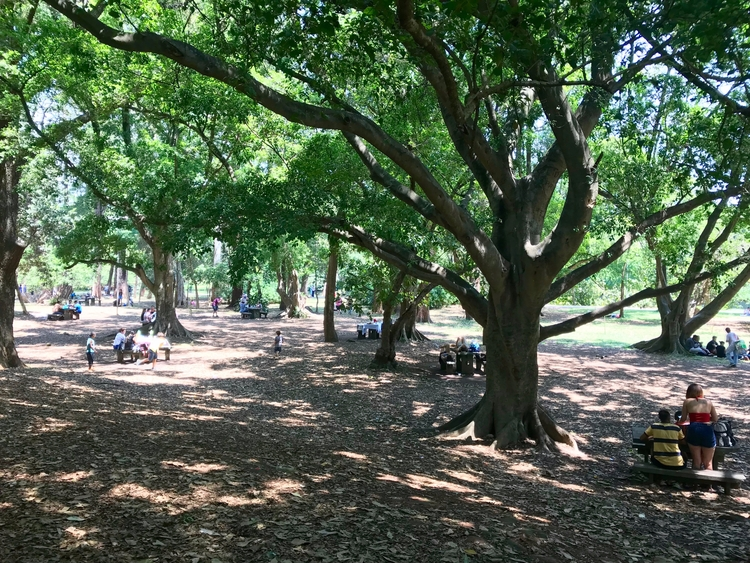 Manhã de primavera Parque Ibira - antoniomg | ello