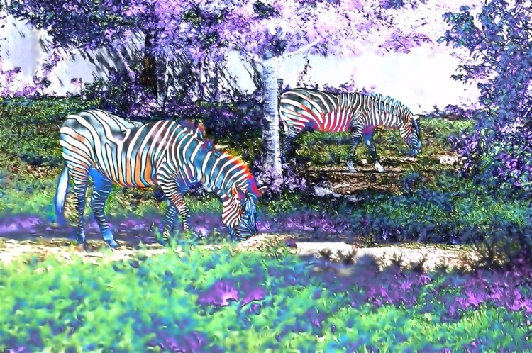 Scenes Phantasm Zoo Images Audu - greycrossstudios | ello