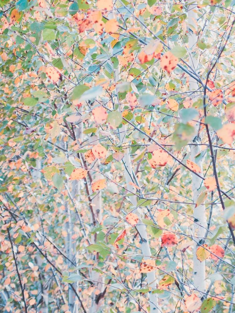 Color fever - foliage, trees, botanical - andreigrigorev | ello