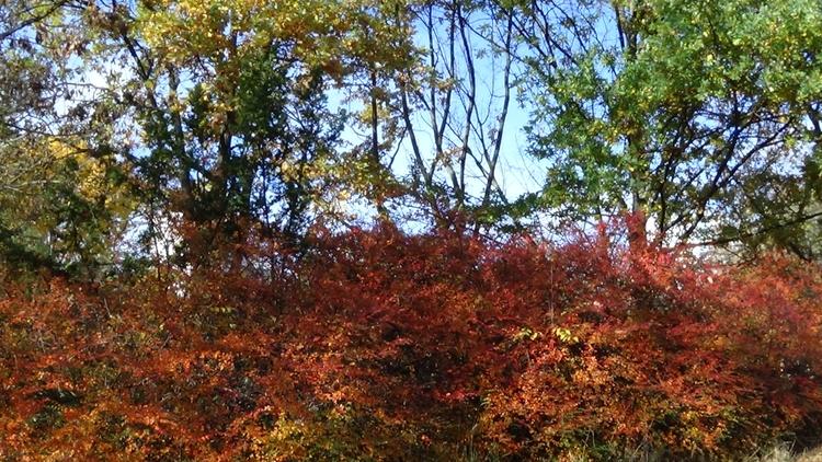 fall, autumn, nature, ellonature - derleu | ello