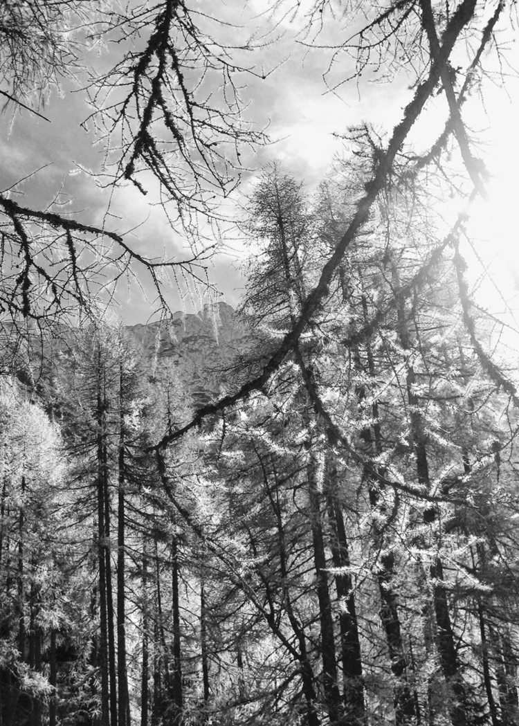 Larch Valley AUSTRIA, 2017 - monochrome - pezzido | ello