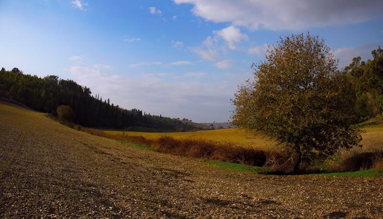 Evening harmony - photography, landscape - elhanans | ello