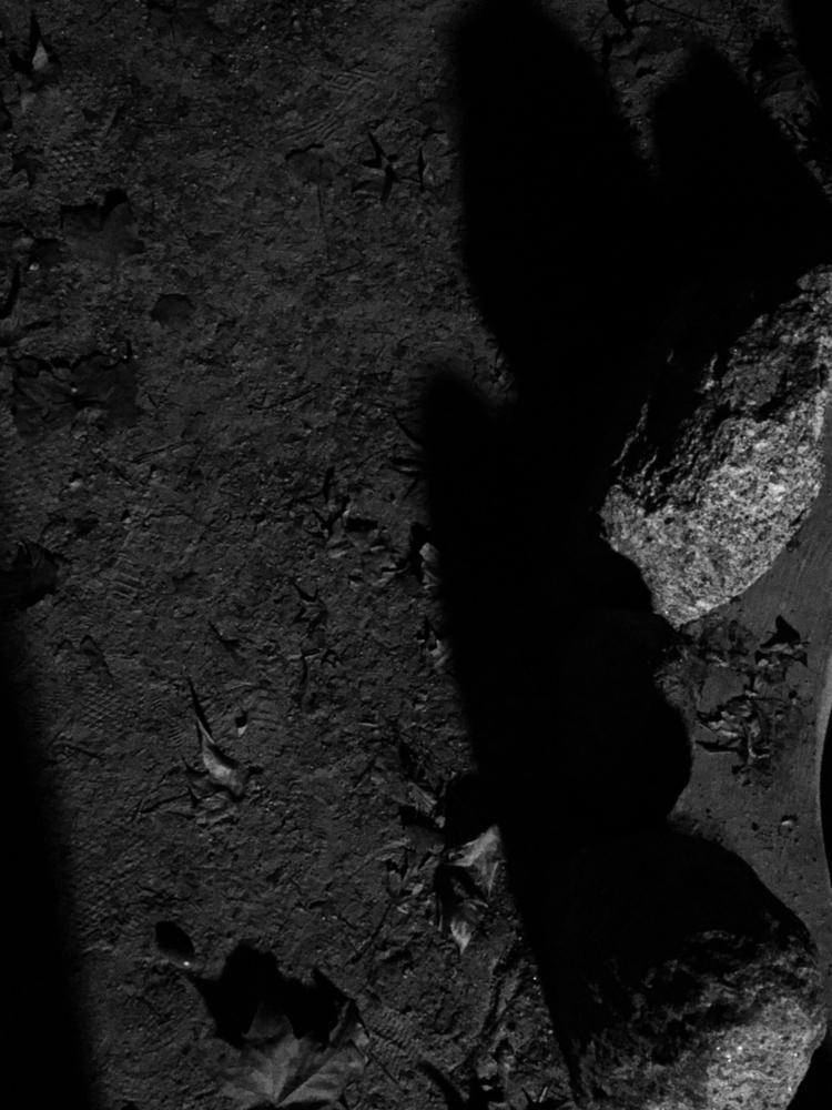 brunonunessousa Post 16 Oct 2017 19:26:40 UTC | ello