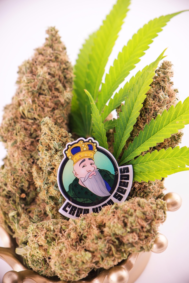 Crop King Seeds World Class Can - cropkingseeds | ello